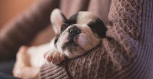Combien coûte une assurance animaux, chien et chat ? Les tarifs !