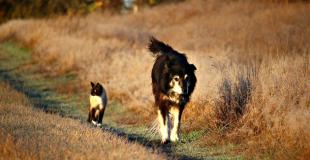 Assurance chien / chat sans délai de carence ni franchise