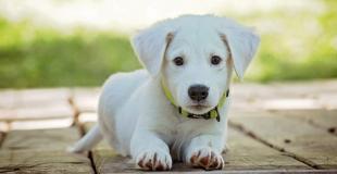 Noms de chiens originaux : quel prénom attribuer à son petit chiot ?