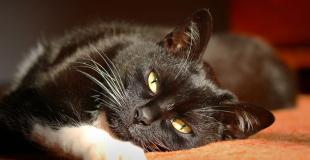Conseils vétérinaires en ligne : une solution pour vos animaux de compagnie
