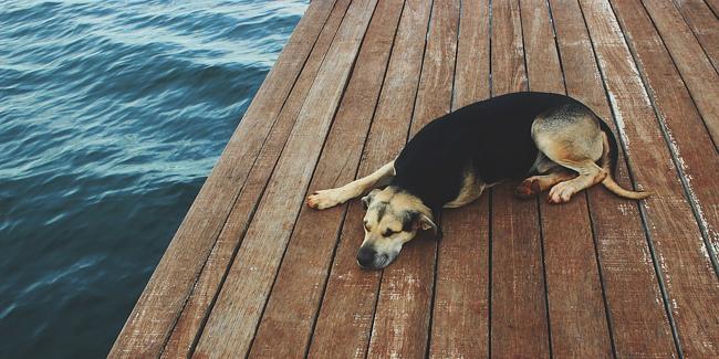 Dysplasie de la hanche chez le chien : symptômes, traitement et prévention