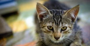 Le coryza du chat : symptômes, traitement et prévention