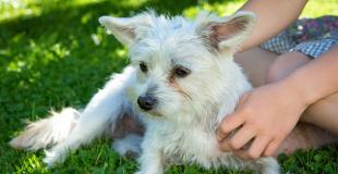 Le diabète chez le chien : symptômes, traitement et prévention