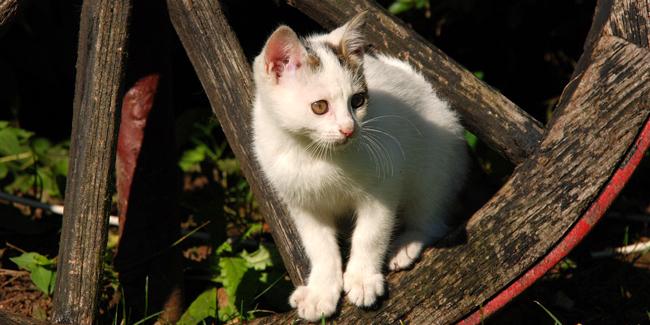 Le chat de gouttière ou chat domestique : caractère et principaux problèmes de santé