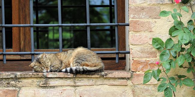 La gale chez le chat : symptômes, traitement et prévention