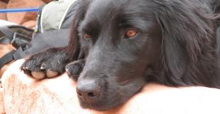 La maladie de Lyme chez le chien : symptômes, traitement et prévention