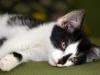 La cystite chez le chat : symptômes, traitement et prévention