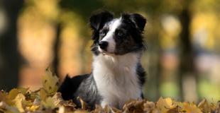 Assurance santé pour animaux de race avec pedigree : quelle couverture choisir ?