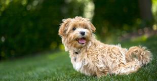 Peut-on annuler ou résilier facilement un contrat d'assurance chat ou chien ?