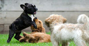 Si on assure plusieurs animaux, la mutuelle propose-t-elle un tarif dégressif ?