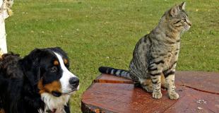 Y a-t-il un âge limite pour souscrire une assurance chat ou chien ?