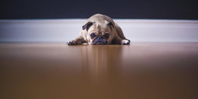 L'infection urinaire chez le chien : symptômes, traitement et prévention