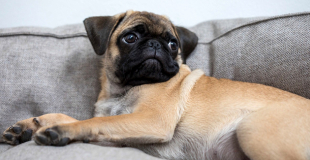 L'épilepsie chez le chien : symptômes, traitement et prévention