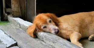 La pancréatite chez le chien : symptômes, traitement et prévention