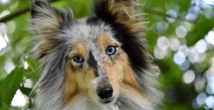 Comment transmettre le contrat d'assurance de son animal de compagnie ?