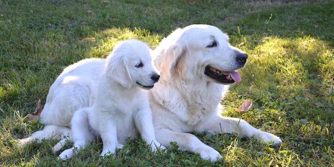 Quand et comment vermifuger son chien et son chiot ?
