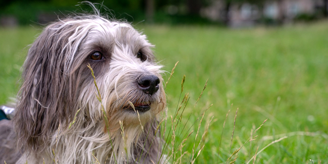 Assurance animaux pas chère (chien / chat) : comment la trouver ?