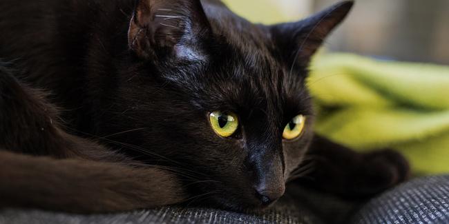 La gingivite chez le chat : symptômes, traitement et prévention