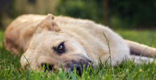 La diarrhée chez le chien : pourquoi, traitement et prévention