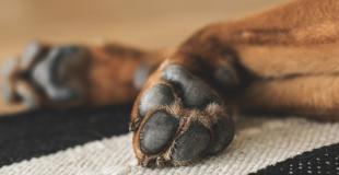 Faire euthanasier son chien : pourquoi, quand, comment ?
