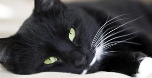 Les vers chez le chat : symptômes, traitement et prévention