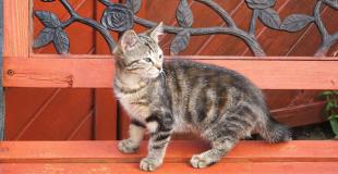L'acné du chat : symptômes, traitement et prévention