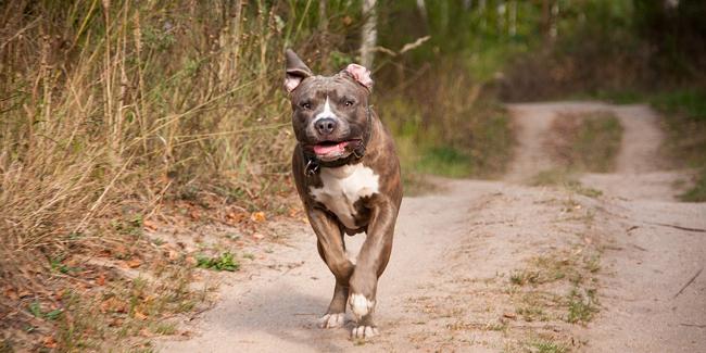 Quelle assurance pour un chien catégorie 1 et chien dangereux ?
