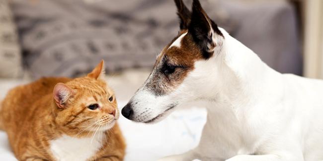 Assurance chien ou chat sans avance de frais : simulation et devis