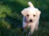 Devis assurance animaux (chien, chat) : quels points vérifier ?