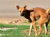 La diarrhée chez le chien : causes, symptômes, traitement et prévention