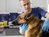 Frais vétérinaires de routine du chien : quels sont-ils ? Quel coût ?