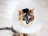 Otite chez le chat : symptômes, traitement et prévention