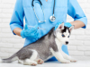 Quand vacciner son chien ? L'utilité du carnet de vaccination du chien