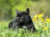 La rage chez le chat : symptômes, traitement et prévention