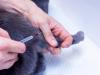 Quelle est la liste des vaccinations obligatoires chez le chat ?