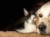 Qu'est-ce que le forfait prévention dans une assurance chien/chat ?