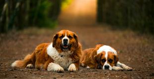 Quelle est la liste des vaccinations obligatoires chez le chien ?
