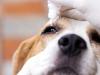 Mutuelle pour traitement sans ordonnance de son animal