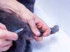 Quand vacciner son chat ?  L'utilité du carnet de vaccination du chat