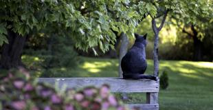 Comment savoir si ma chatte est gestante et attend des chatons ?