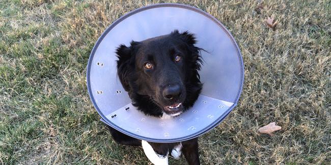 Les maladies du chien