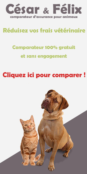 Comparateur d'assurance animaux