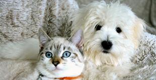 L'œdème pulmonaire chez le chien : symptômes, traitement et prévention